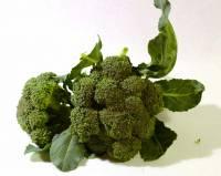 Broccoletto