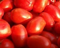 cassa pomodoro da sugo